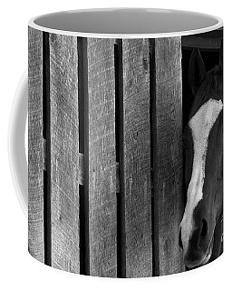 Coffee Mug featuring the photograph Handsome T by Angela Rath