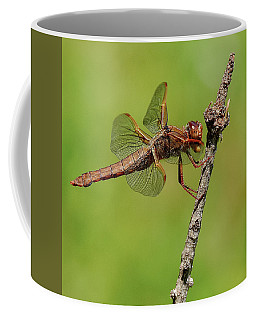 Hanging On Coffee Mug by Yeates Photography