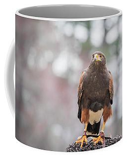 Harris Hawk Coffee Mug