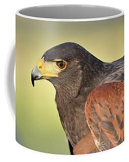 Harris's Hawk Coffee Mug by Alan Lenk