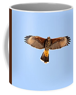 Coffee Mug featuring the photograph Harris's Hawk H36 by Mark Myhaver