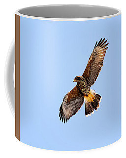 Coffee Mug featuring the photograph Harris's Hawk H37 by Mark Myhaver