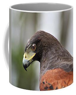 Harris's Hawk Profile Coffee Mug