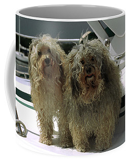 Havanese Dogs Coffee Mug by Sally Weigand