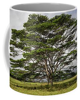 Hawaiian Moluccan Albizia Tree Coffee Mug