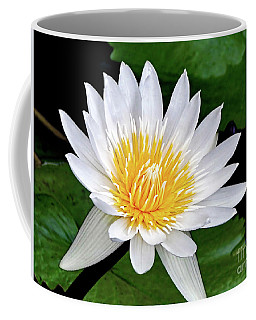 Hawaiian White Water Lily Coffee Mug