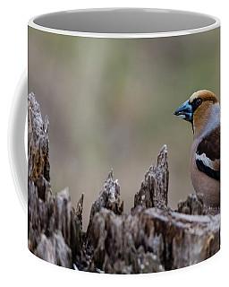 Hawfinch Perching Coffee Mug by Torbjorn Swenelius