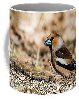 Hawfinch's Gaze Coffee Mug by Torbjorn Swenelius
