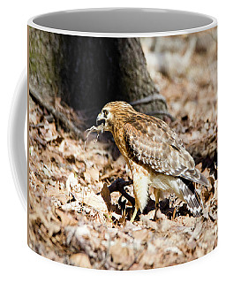 Coffee Mug featuring the photograph Hawk And Gecko by George Randy Bass