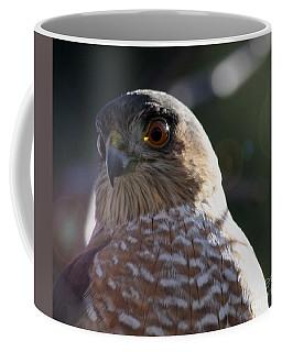 Hawk Eyes Coffee Mug by Mary-Lee Sanders