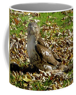 Hawk Falling Leaves Coffee Mug