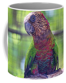 Hawk-headed Parrot Coffee Mug