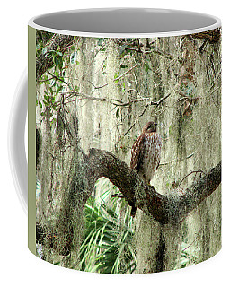 Hawk In Live Oak Hammock Coffee Mug