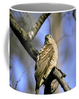 Hawk Coffee Mug by Manjot Singh Sachdeva