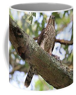Hawk On A Branch Coffee Mug