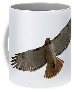 Coffee Mug featuring the photograph Hawk Overhead by Brian Hale