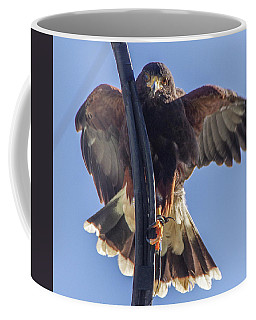 Coffee Mug featuring the photograph Hawk Watch 6 by Phyllis Spoor