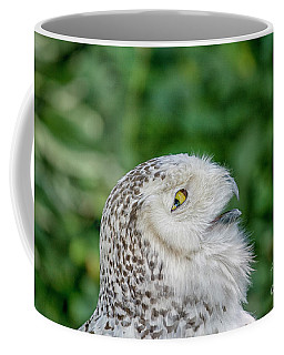 Head Of Snowy Owl Coffee Mug