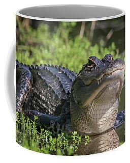 Heads-up Gator Coffee Mug