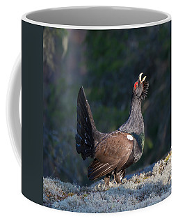 Heather Cock In The Morning Sun Coffee Mug