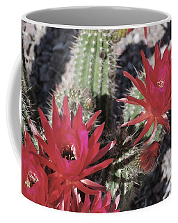 Hedgehog Cactus Coffee Mug