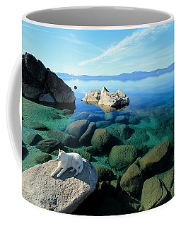 Coffee Mug featuring the photograph Hello Gorgeous by Sean Sarsfield