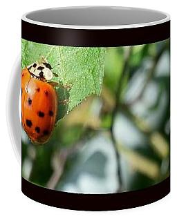 Hello Lady Coffee Mug