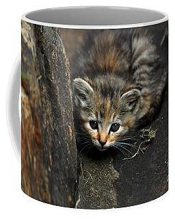 Hello Little Kitty Coffee Mug by Eric Liller