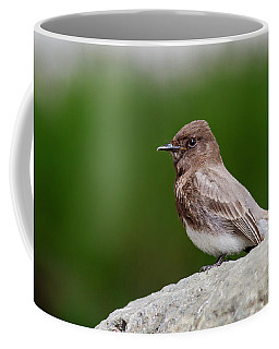 Black Phoebe Coffee Mug