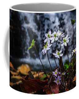 Coffee Mug featuring the photograph Hepatica And Waterfall by Thomas R Fletcher