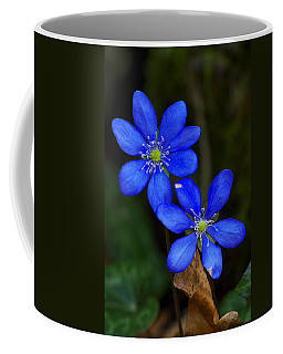 Hepatica Nobilis Coffee Mug