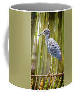 Yellow-crowned Night Heron Costa Rica Coffee Mug