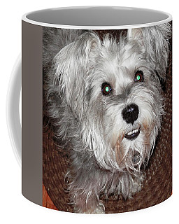 Coffee Mug featuring the photograph Hi I Am Osa The Schnauzer by Belinda Lee