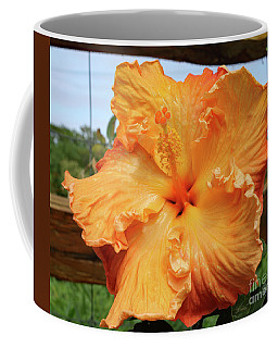 Hibiscus And Fence Coffee Mug by Mary Haber
