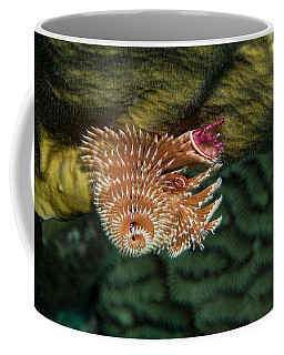 Coffee Mug featuring the photograph Hidden Christmastree Worm by Jean Noren