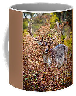 Coffee Mug featuring the photograph Hiding In The Bracken by Nick Bywater