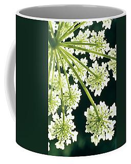 Himalayan Hogweed Cowparsnip Coffee Mug