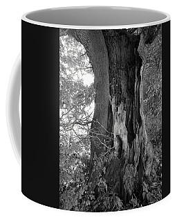 Hollow Tree Coffee Mug