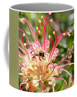 Honey Bee On Grevillea  Coffee Mug