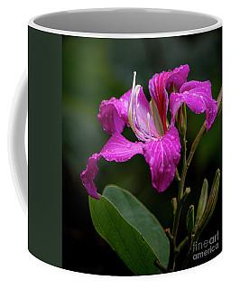 Hong Kong Orchid Coffee Mug
