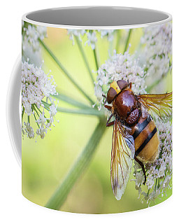 Hornet Mimic Hoverfly - Volucella Zonaria Coffee Mug
