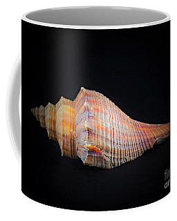 Horse Conch Coffee Mug