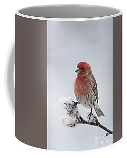 House Finch And Spring Snowfall - D010346 Coffee Mug