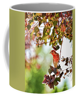 Coffee Mug featuring the photograph House Finch Hanging Around by Kerri Farley