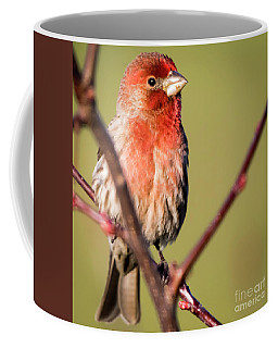House Finch In Full Color Coffee Mug