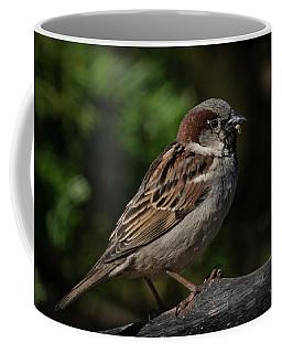 House Sparrow 2 Coffee Mug