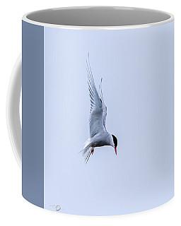 Hovering Arctic Tern Coffee Mug