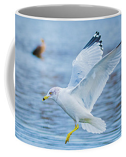 Hovering Seagull Coffee Mug by Jeff at JSJ Photography