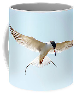 Hovering Tern Coffee Mug
