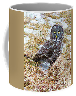 Huh- Great Gray Owl Coffee Mug